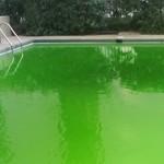 Antialgas piscina